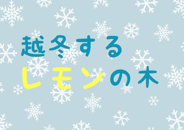 レモンの越冬④