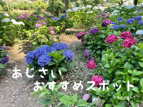 福岡県のあじさいおすすめスポット