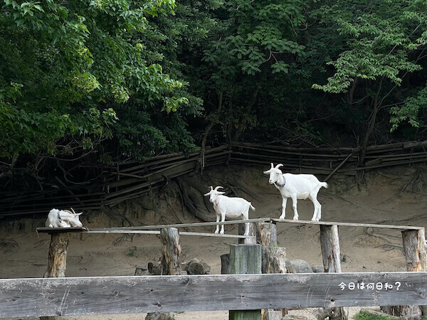 宮地嶽神社のヤギ